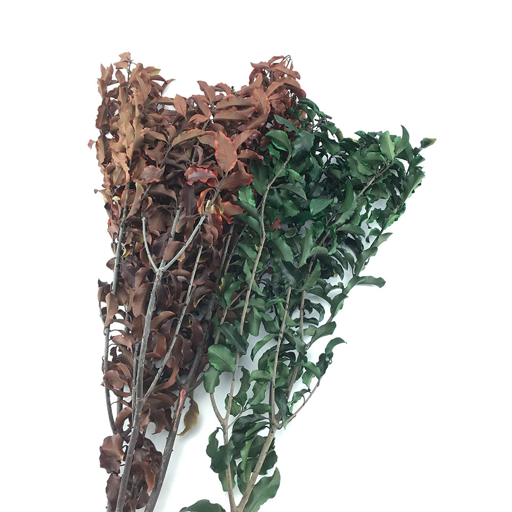 Preserved Wutong Leaves